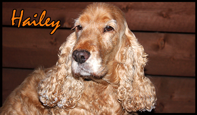 hailey1