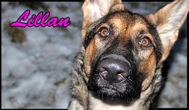 lillan1