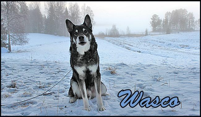 wasco1